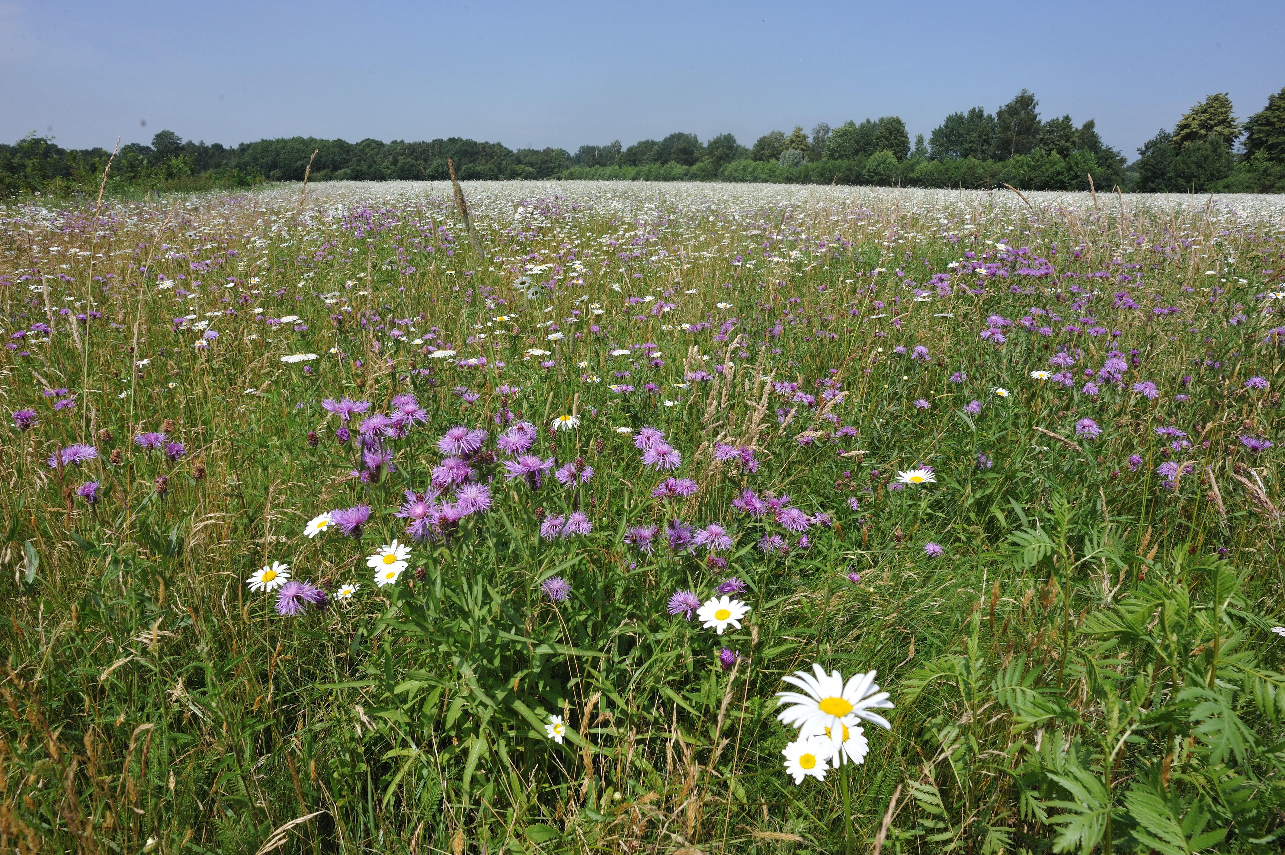 Naturschutzgerecht genutztes Grünland (c) Stiftung NLW