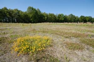 Heideflächen an der Remise (c) Stiftung NLW
