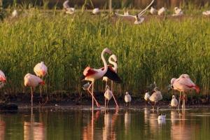 FlamingosUndKüken_Insel_IMG_4308_Stroetmann_2013_06_18