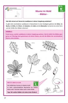 Forscherheft Wald_Blätter