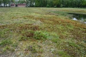 Heidefläche an der Remise (c) Stiftung NLW