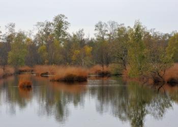 Hündfelder Moor (c) C. Rückriem