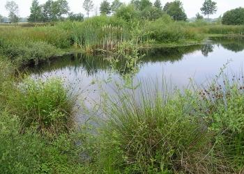 Laubfrosch Habitat